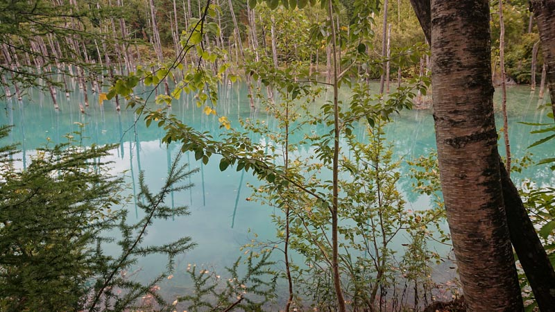 青い池,青くない